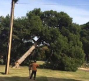 Glenside trees under threat