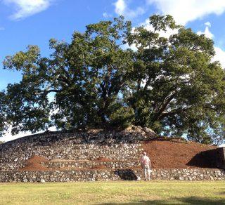 Practical stewardship of trees