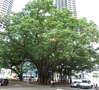Tree protection in Australia