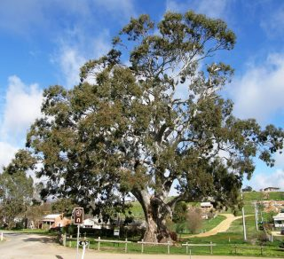 Victorian Tree of the Year