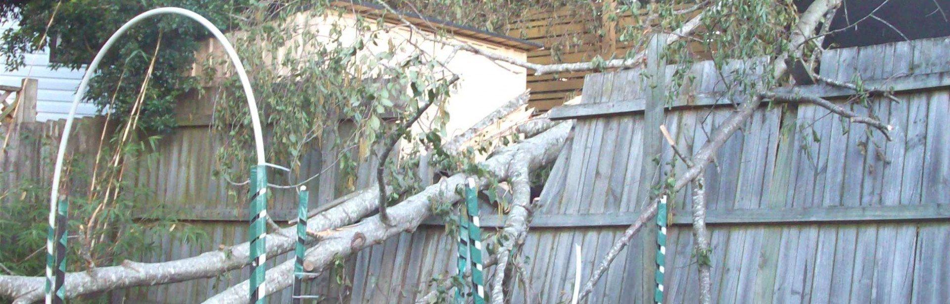 Tree Failed Fence - NSW Trees & Neighbours Legislation