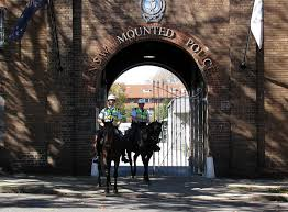 A Tour through the Sydney Mounted Police Stables