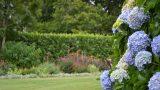 retford park garden open day Hydrangea
