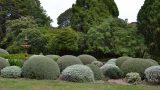 Retford Park garden open day hedges