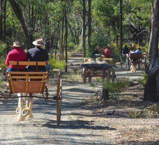 The Moora Working Draught Horse Muster