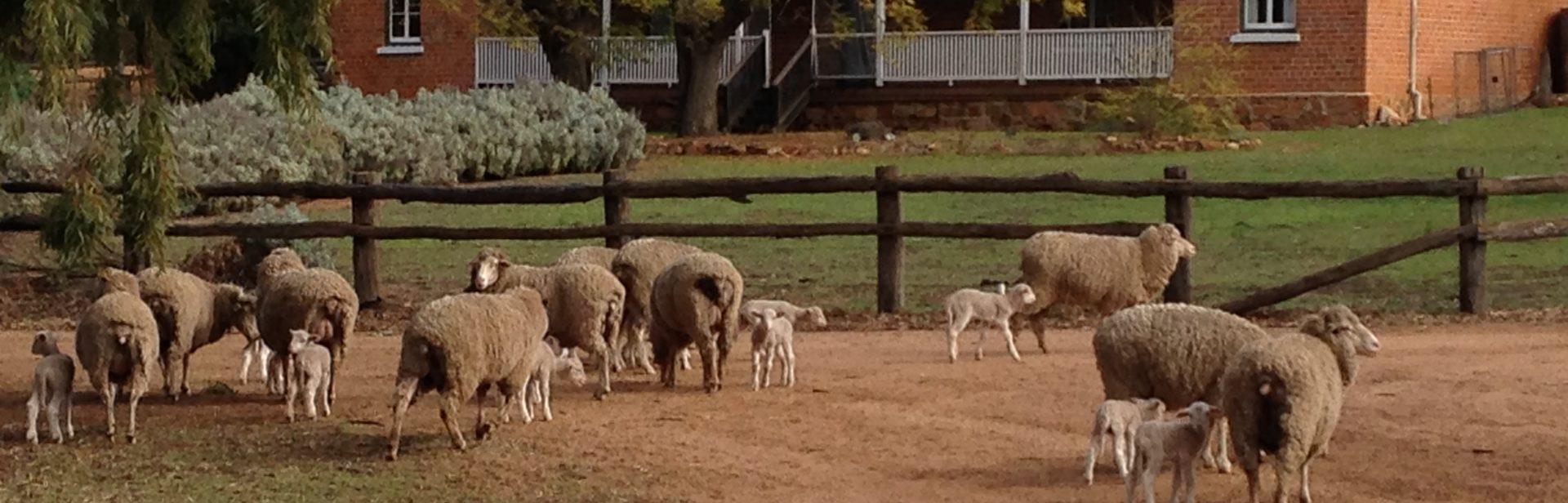 Avondale Farm
