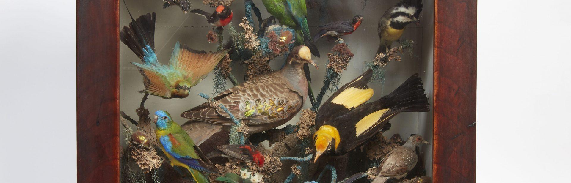 Birds of Parramatta NT Collection NT0320_1153