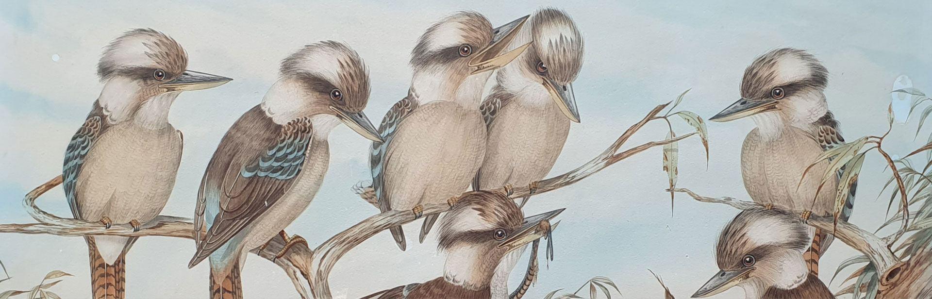 GF Gregorys beautiful 1895 watercolour Seven Kookaburras