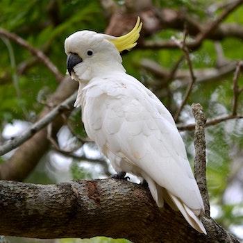 Bird Observation Walk