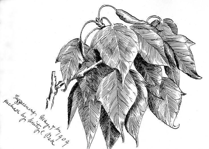 Emily Rose Twynam sketch