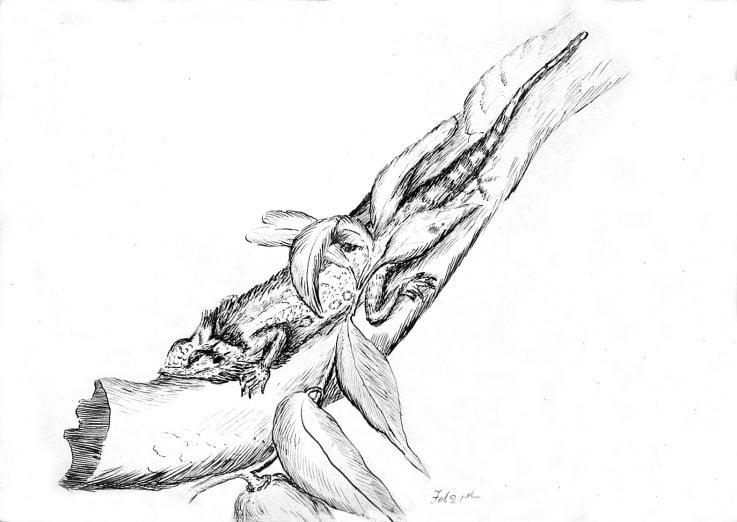 Emily Rose Twynam lizard sketch