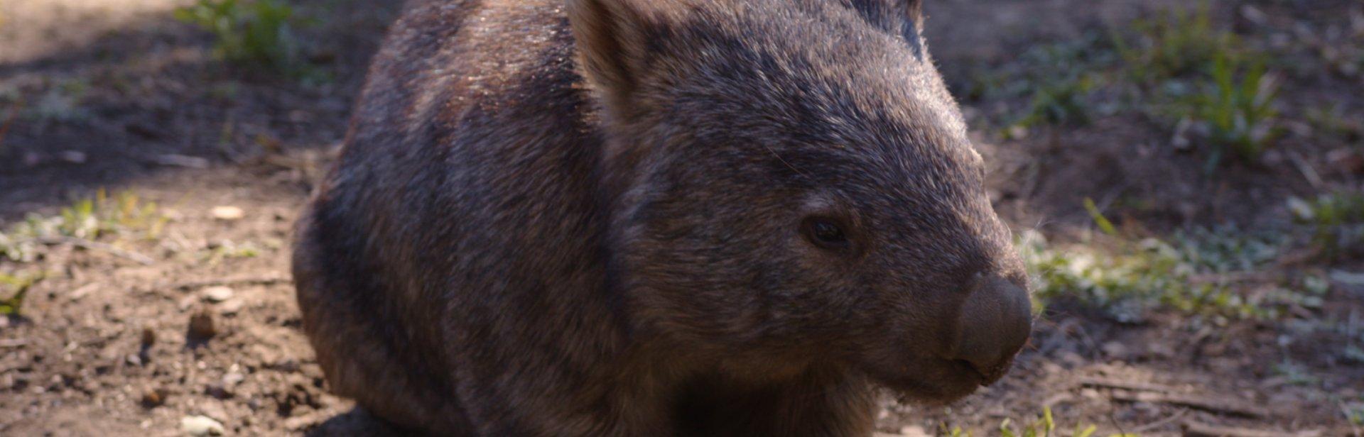 Australian Wildlife Sanctuary